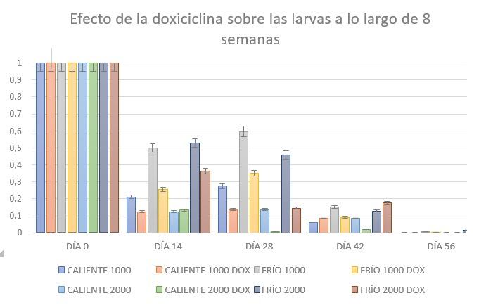 Efecto ex vivo de la doxiciclina sobre larvas a lo largo de 8 semanas